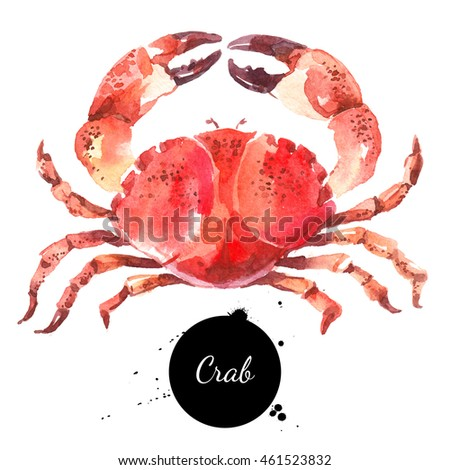 Watercolor hand drawn crab. Isolated fresh seafood illustration on white background