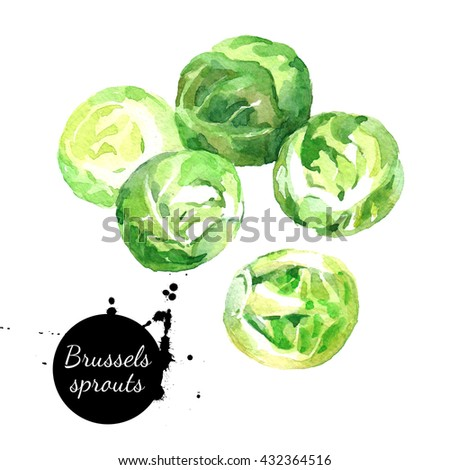 Watercolor hand drawn fresh brussels sprouts. Isolated organic natural eco illustration on white background - stock photo