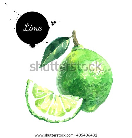 Watercolor hand drawn lime. Isolated eco natural food fruits illustration on white background - stock photo