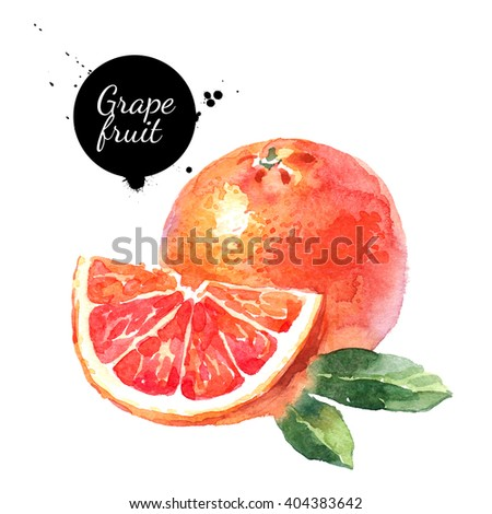 Watercolor hand drawn pink grapefruits. Isolated eco natural food fruits illustration on white background - stock photo