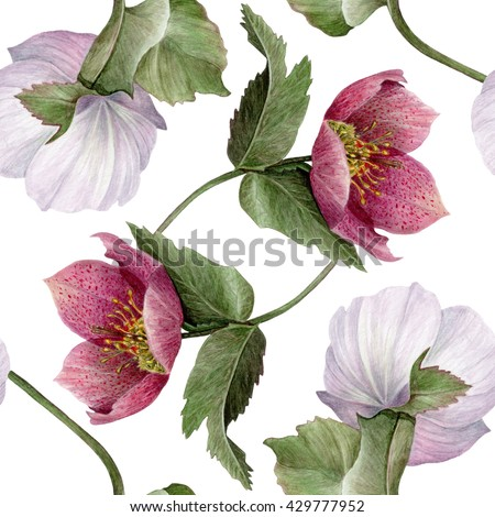 Watercolor Hellebore flower seamless pattern on white background. Pastel Green, Pink, Purple & White backdrop. Cloth & rug design. Rustic style. Hand drawn botanical illustration. - stock photo
