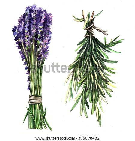 Watercolor herbs Lavender and rosemary. Floral watercolor illustration. Illustration for greeting cards, invitations, and other printing projects. - stock photo