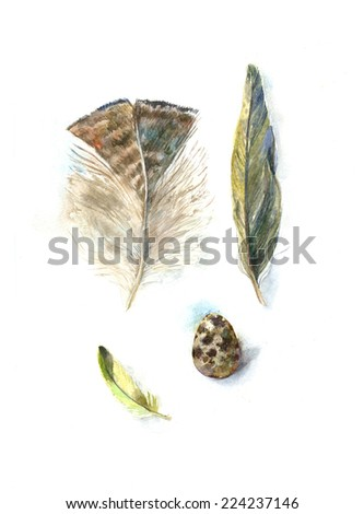 watercolor illustration feathers and quails egg  - stock photo