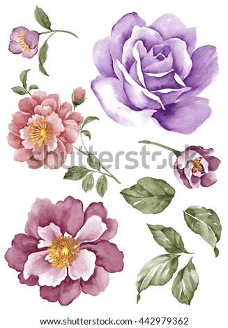 watercolor illustration flower set in simple white background