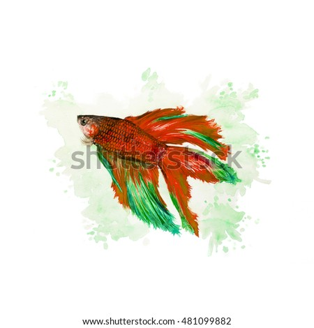Watercolor illustration of a siamese fighting fish on a green background