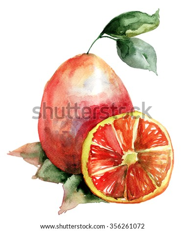 Watercolor illustration of colorful Oranges  - stock photo