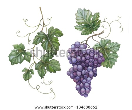 Watercolor illustration of grapes with leaves - stock photo