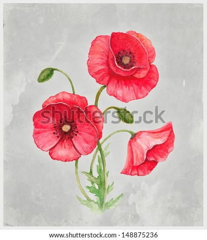 Watercolor illustration of poppy flower. Perfect for greeting card - stock photo