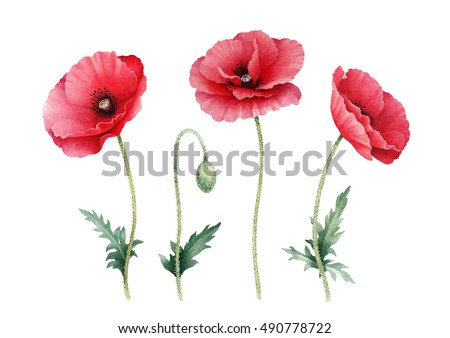 Watercolor illustration poppy flowers perfect greeting stock watercolor illustration of poppy flowers perfect for greeting cards or invitations mightylinksfo