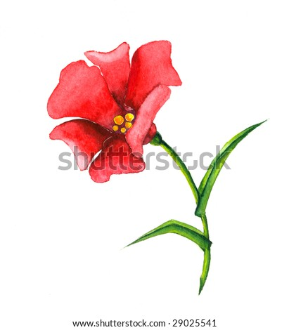 Watercolor illustration of red flower in bloom, isolated on white background.