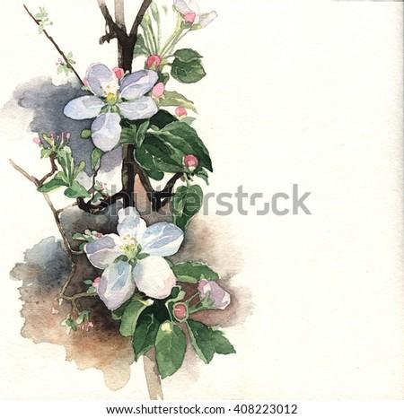 Watercolor illustration of springtime apple blossom  - stock photo
