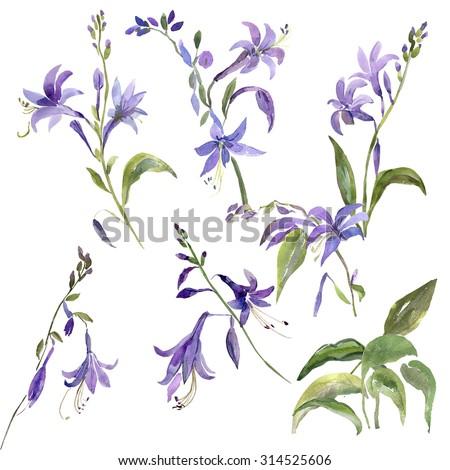 Watercolor illustration of summer garden flowers  pattern - stock photo