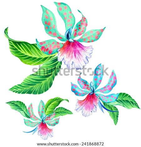 watercolor illustration of tropical flowers. single flower with leaves isolated on white. - stock photo