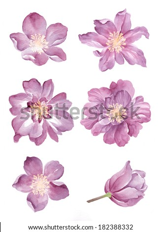 watercolor illustration Purple flower set  in simple background  - stock photo