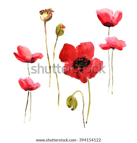 watercolor illustration sketch of poppies - 2