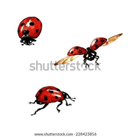watercolor illustration with ladybugs