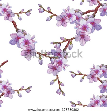 Watercolor illustration with sakura branch isolated on white background. Spring background. Japanese cherry blossom. Blooming apple flowers. Wedding card. Beautiful seamless pattern - stock photo