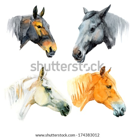 Watercolor illustrations of black, white, chestnut and seal brown horses - stock photo