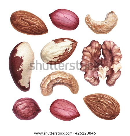 Watercolor illustrations of nuts