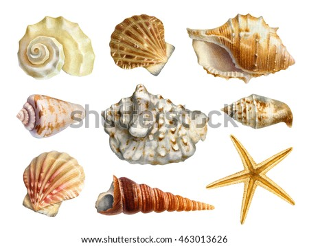 Watercolor illustrations of shells