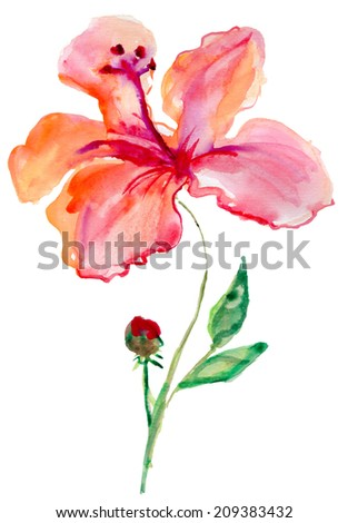 Watercolor image of flower of red hibiscus - stock photo