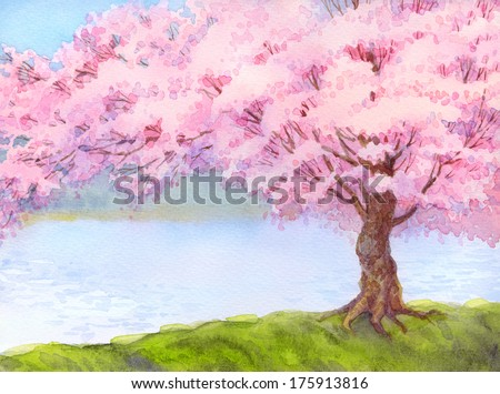 Watercolor landscape. Flowering pink tree by the lake