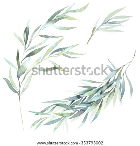 Watercolor leaves branch set. Hand painted eucalyptus elements isolated on white background. Artistic clip art - stock photo