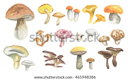 Watercolor mushrooms set. Healthy food, autumn nature concept. Delicious edible mushrooms.