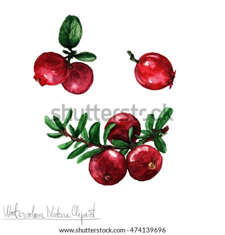 Watercolor Nature Clipart - Cranberry