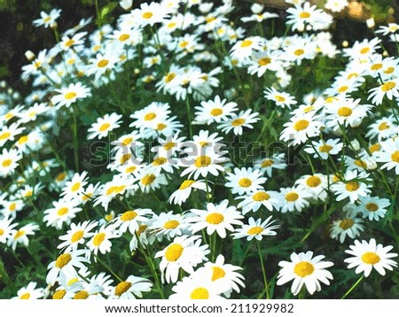 watercolor of white cosmos flowers in nature