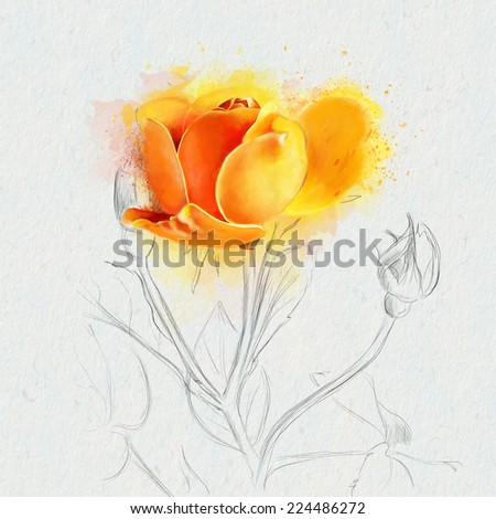 Watercolor orange rose - stock photo