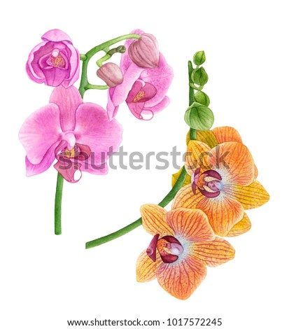 Watercolor orchids pink yellow orchid flowers stock illustration watercolor orchids pink and yellow orchid flowers beautiful flowers isolated on white background mightylinksfo