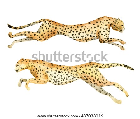 Watercolor painting a running leopard, leopard in flight, isolated object,