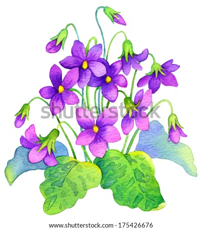 Watercolor painting. Bright purple flowers and lush green leaves bush forest violet isolated on white background - stock photo