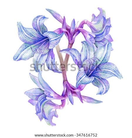watercolor painting of violet flower on white background - stock photo