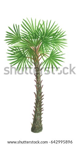 Watercolor painting palm trees isolated on white background
