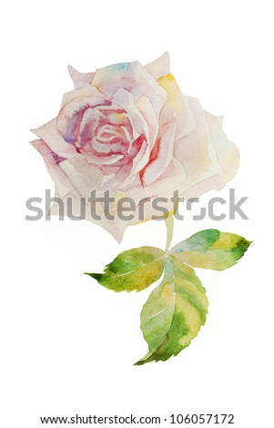 watercolor painting pink rose head - stock photo