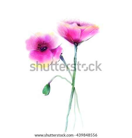 Watercolor painting poppy flower. Isolated flower on white background. Pink and red poppy flower painting. Hand painted watercolor floral, flower background.  - stock photo