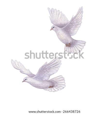 Watercolor pair of flying doves isolated on white background. - stock photo
