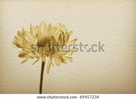 Watercolor paper background with monochrome sepia image of a flower. Romantic and sadness concept - stock photo