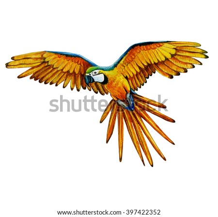 watercolor parrot illustrate, colorful bird painting - stock photo