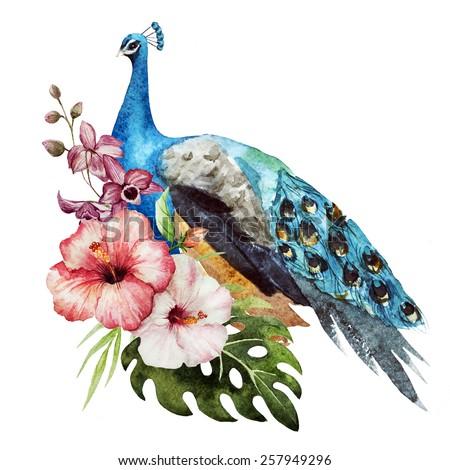 watercolor, peacock, magnolia, flowers, birds - stock photo