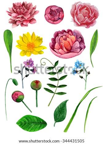 watercolor peonies flowers clip art botanical stock illustration rh shutterstock com penny clip art penny clip art