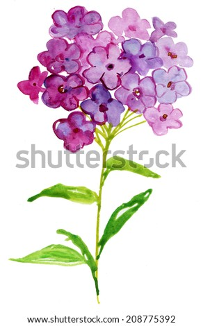 Watercolor Phlox. Watercolor flower phlox. Hand painting. Illustration for greeting cards, invitations, and other printing projects. - stock photo