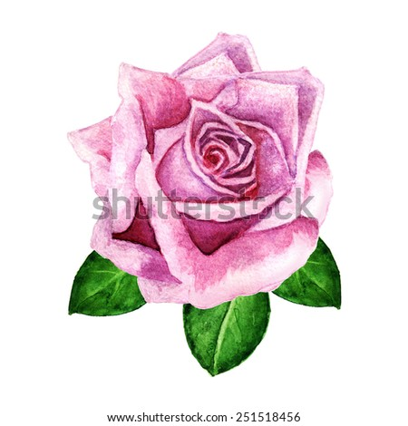 Watercolor pink rose flower, bud, green leaves closeup isolated on a white background - stock photo