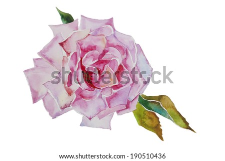 watercolor pink rose with leaves original illustration isolated on white background - stock photo