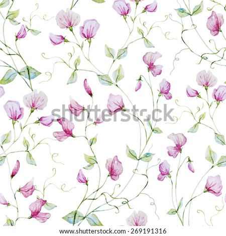 Watercolor, plant, sweet peas, botany, flower, background, texture, wallpaper, seamless, pink - stock photo