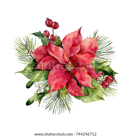 Poinsettia Stock Images Royalty Free Images Vectors