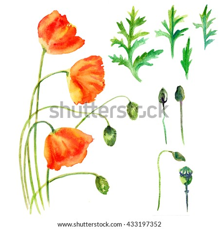 Watercolor poppy flower bud leaves hand stock illustration 433197352 watercolor poppy flower bud leaves hand drawn botanical illustration isolated on white background for mightylinksfo