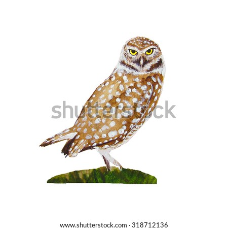 watercolor pygmy owl - stock photo